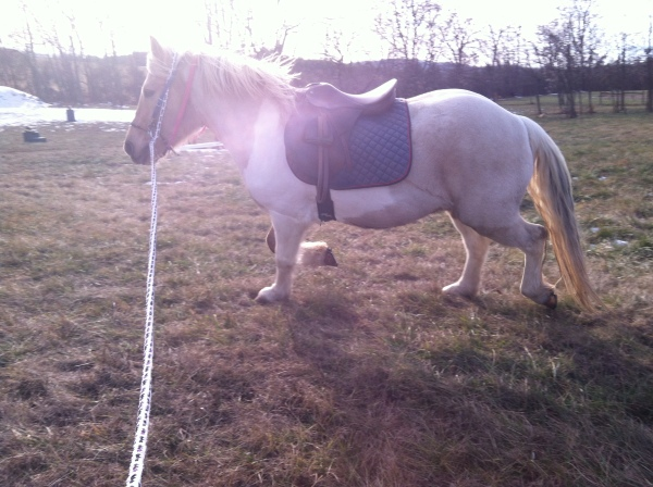 Here he is the next day on the lunge line.  He was feeling particularly fresh in the brisk wind with his hew hair style.