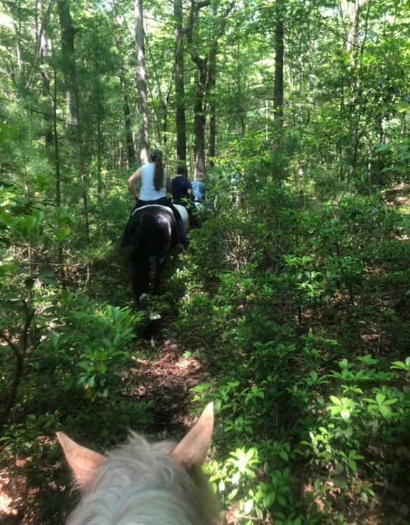 Trail Riding | Blue Ridge Pony